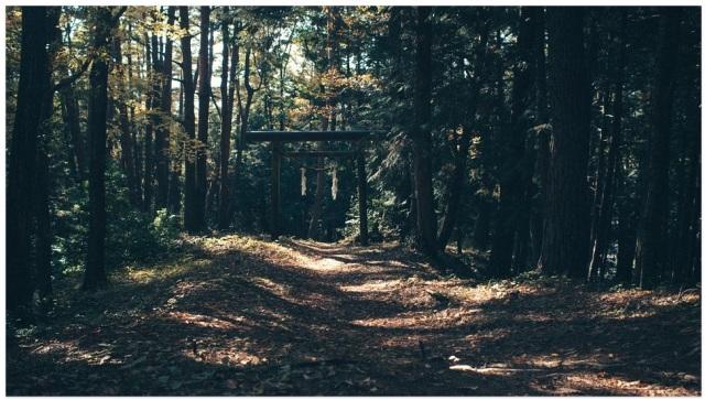 USFS trail.jpg