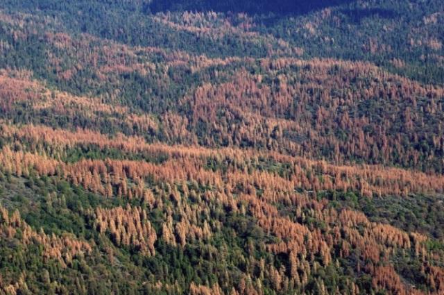 tree-mortality-2.jpg